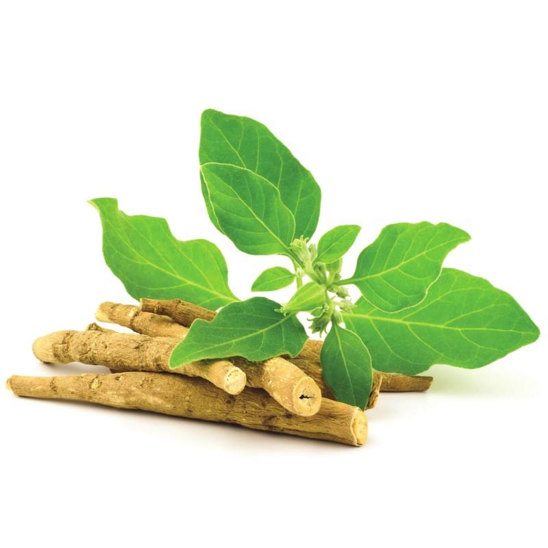 Ashwagandha poudre Bio anti-stress